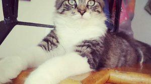 Кота случайно отправили посылкой по почте