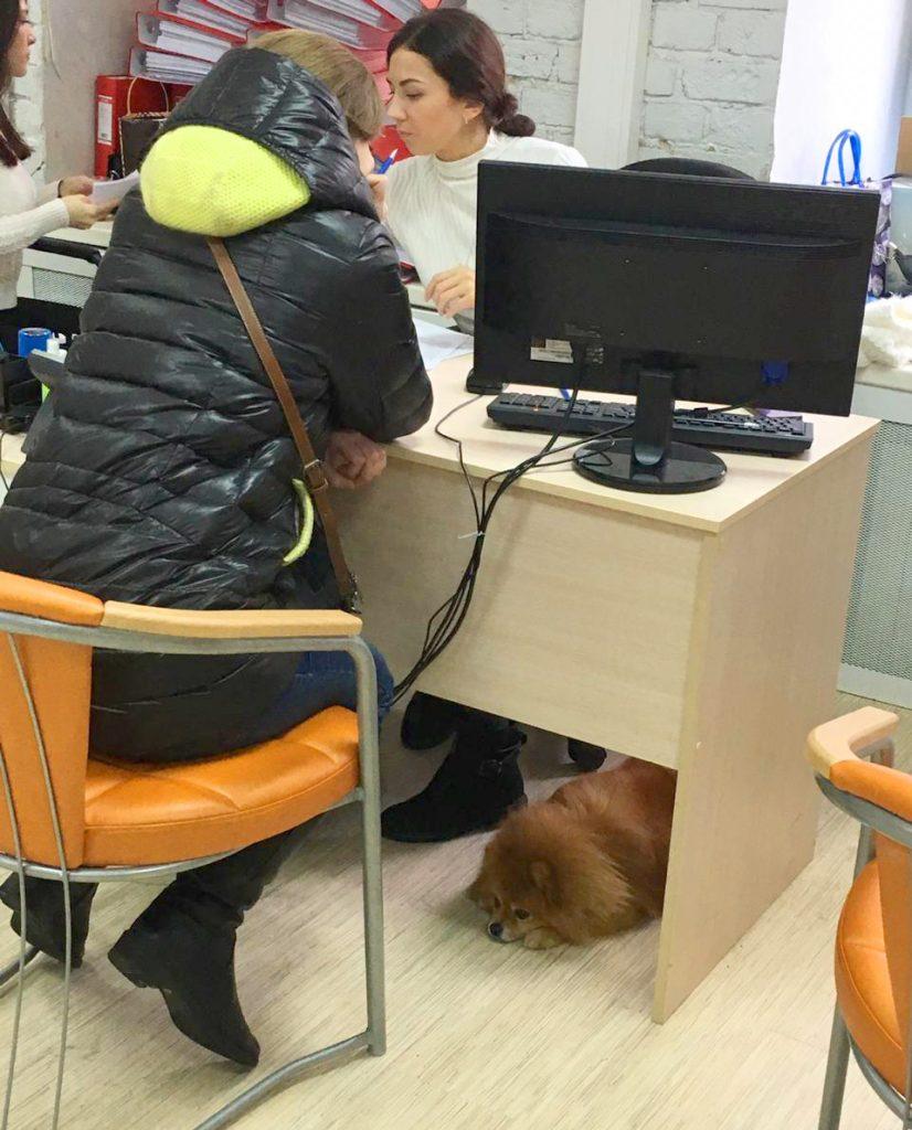 изъятая собака в офисе коллекторов