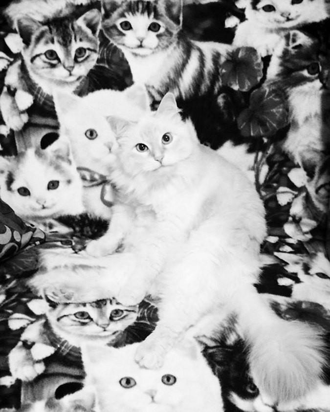 найди кота на фото