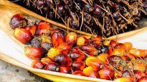 пальмовое масло - кто травит россиян